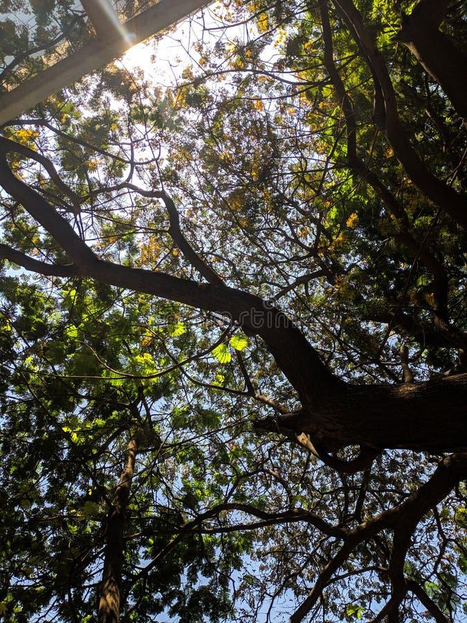 Sous l'arbre image libre de droits