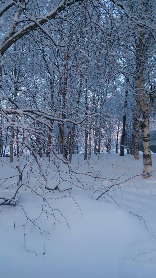 Sous la neige photographie stock libre de droits