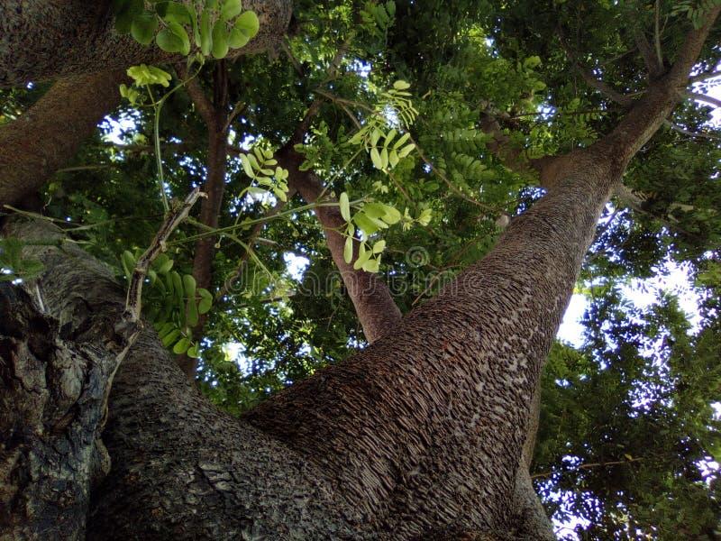 Sous la nuance de l'arbre image libre de droits