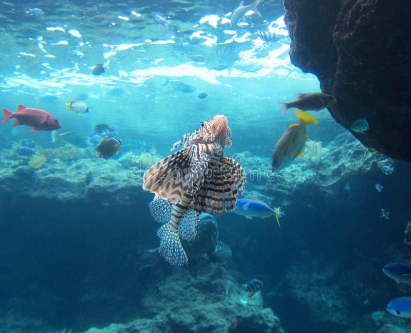Sous le monde de l'eau images stock