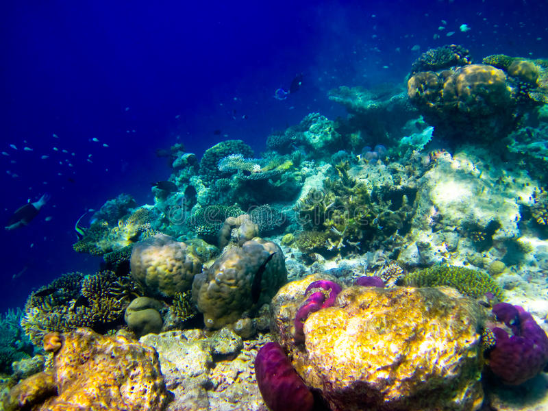 Sous le monde de l'eau chez les Maldives photo libre de droits