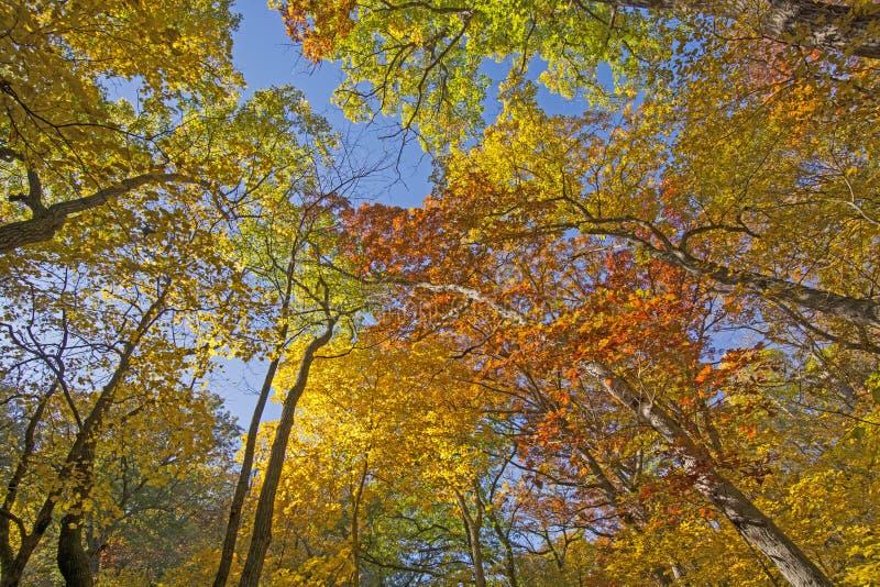 Sous un auvent coloré d'automne image stock
