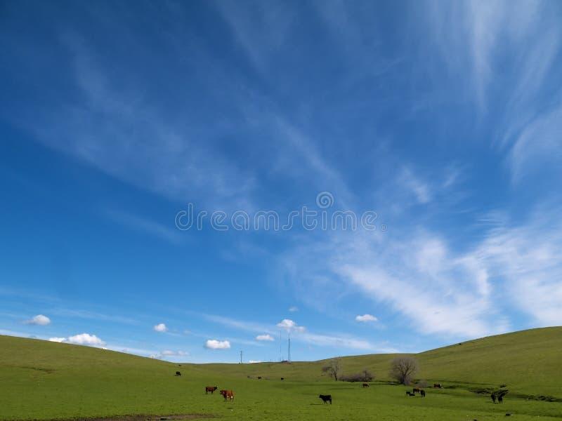 Sous un ciel de la Californie d'hiver images libres de droits