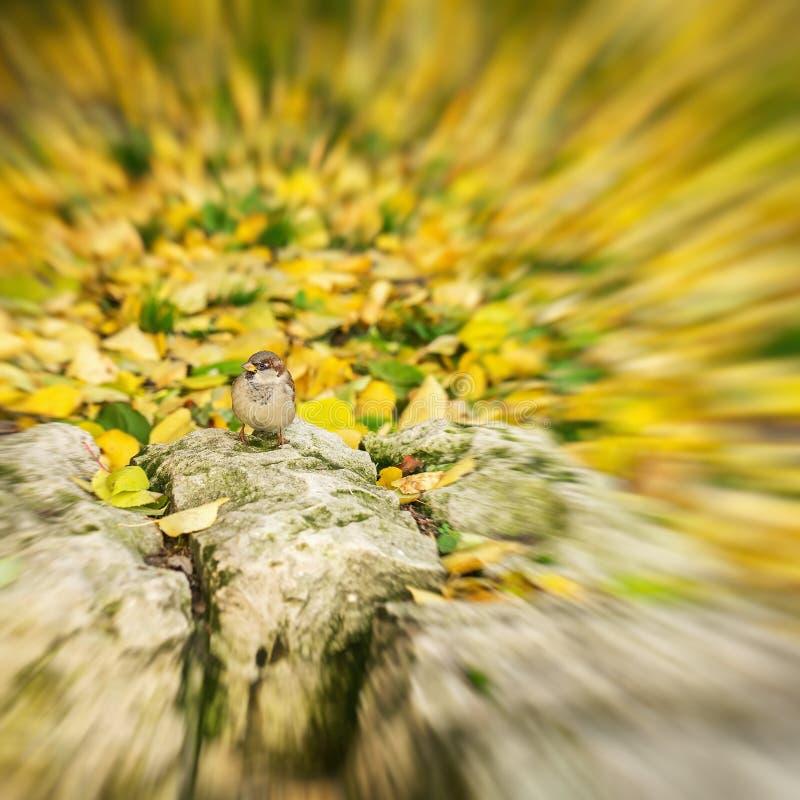 Soustrayez le fond brouillé d'automne dans des couleurs d'or, petit oiseau, moineau se dore au soleil saisons images stock