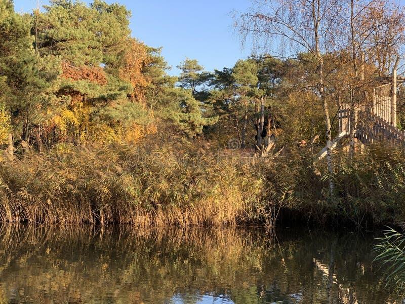 Soutenez se reposer dans l'arbre entouré par des arbres d'automne images stock