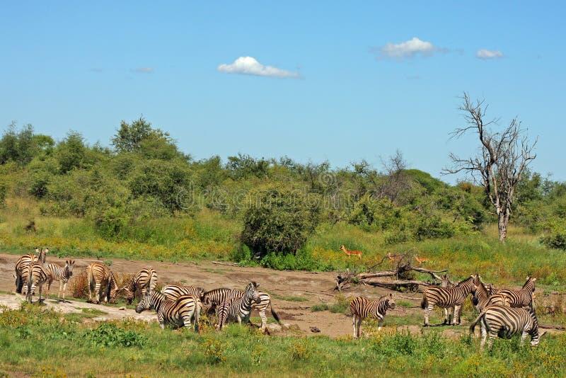 South Africa Bushveld