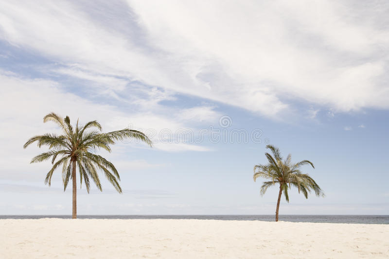 Download South Africa,Palm Beach stock photo. Image of nobody - 10001908