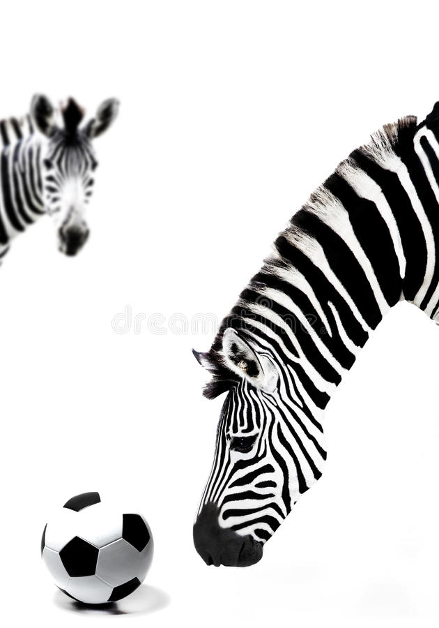 Download South Africa Zebra And Soccer Ball Royalty Free Stock Photo - Image: 14597985