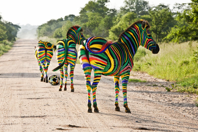 South African Zebras. Decorated with the South African flag colours pperaring for the 2010 Fottball World Cup