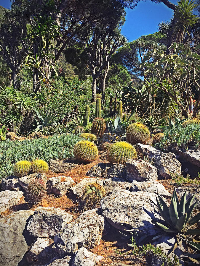 South american garden royalty free stock photography