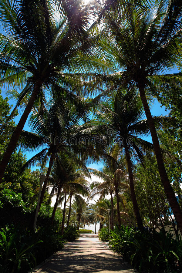 South Beach Alley royalty free stock photography