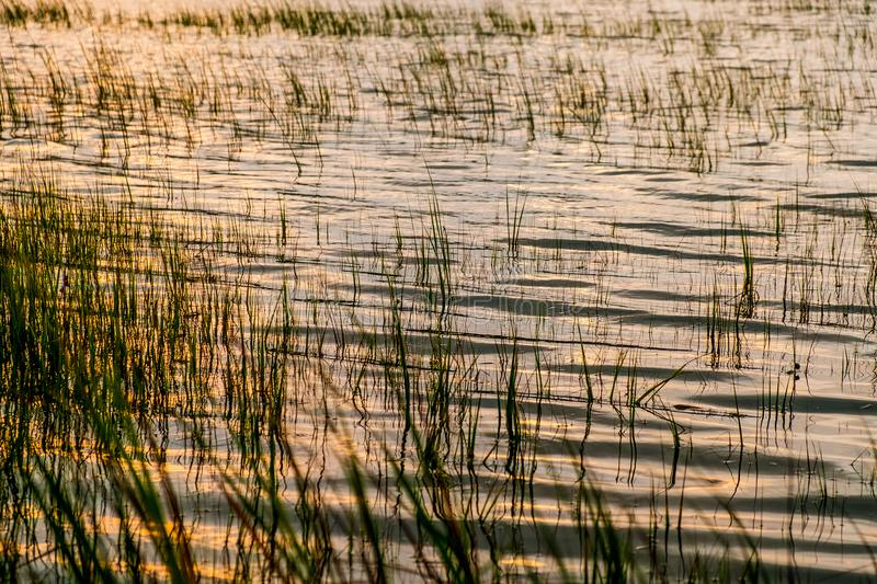 South carolina low country marsh grass at sunset after flood royalty free stock image
