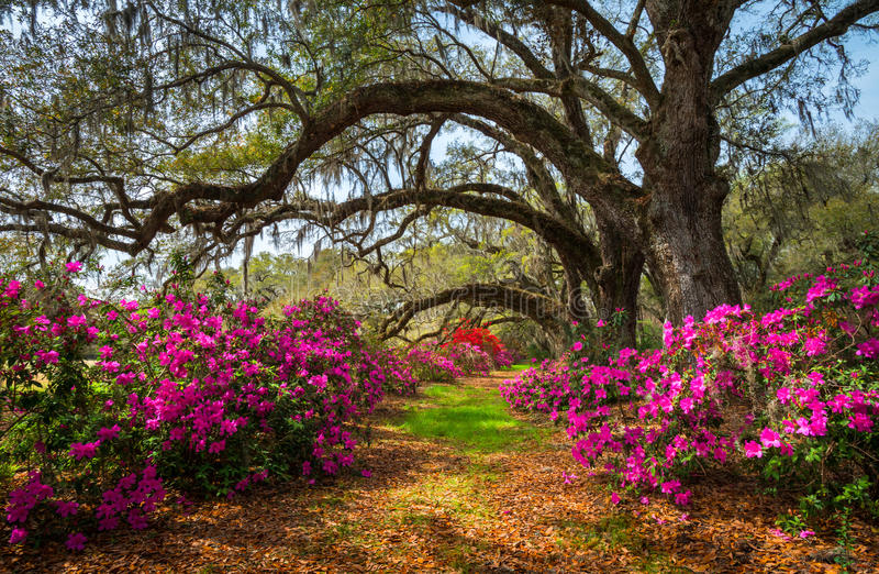 South carolina spring flowers charleston sc lowcountry for Landscaping plants south carolina