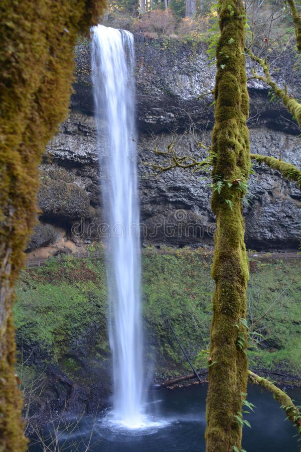 South Falls framed between trees at Silver Falls Park, Oregon. The South Falls is framed between two trees at Silver Falls State Park, Oregon stock photography