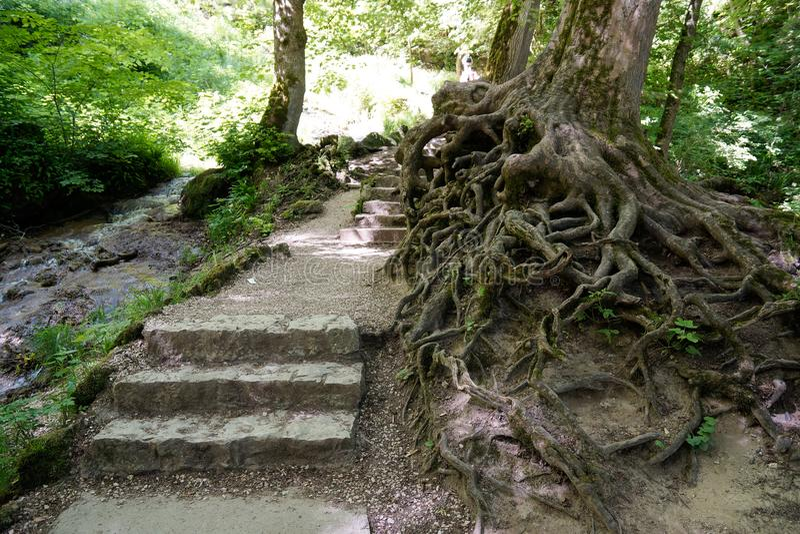 Wild tree roots in biosphere of swabian alb. South german travel destinations wild tree roots in biosphere of swabian alb stock photography