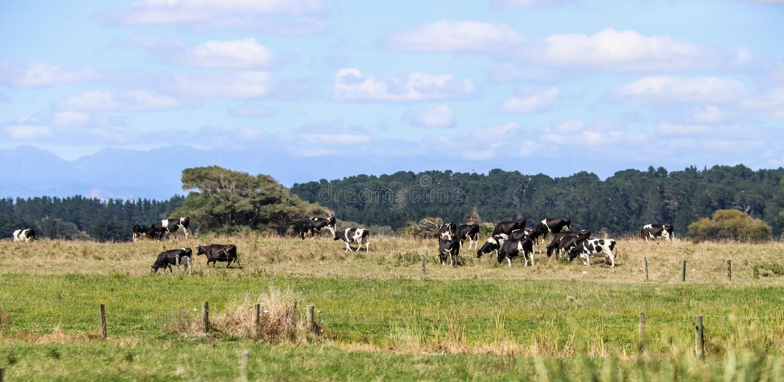 South Island farms, rivers and forests of New Zealand stock photo