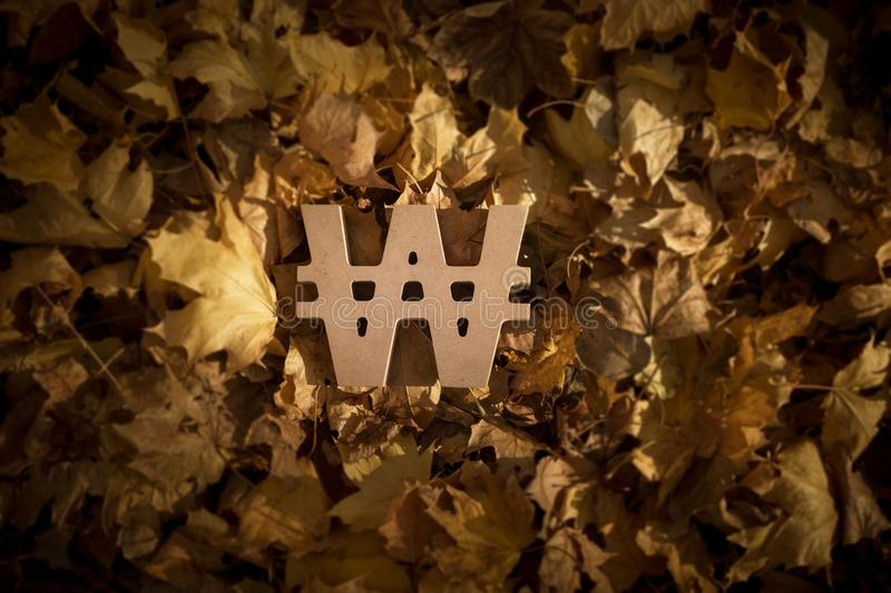 Won Currency Symbol on Autumn Leaves in Late evening Sun. South Korean Won Currency Symbol on Autumn Leaves in Late evening Sun stock photo