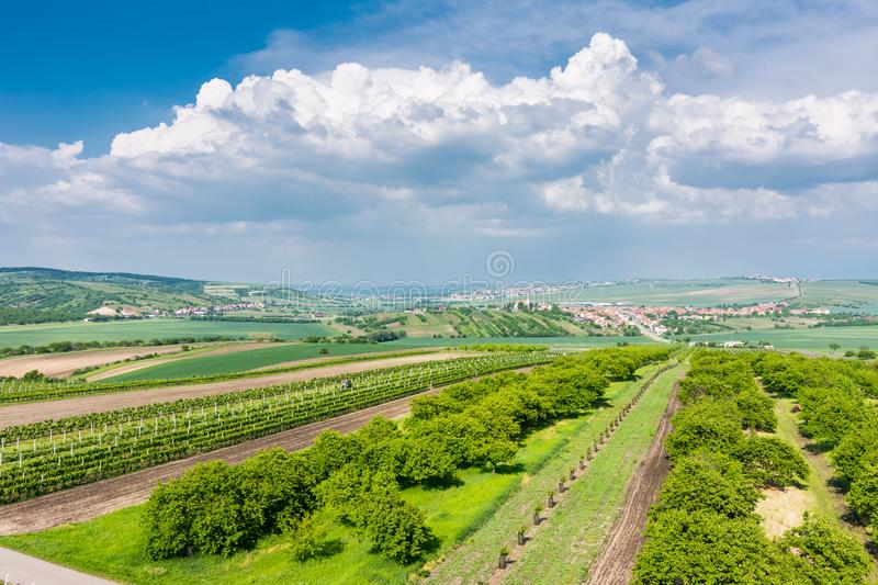 South Moravia, Czech republic: Vineyard fields on agriculture land. Countryside meadow, vineyard plant and beautiful landscape nea. R small village. Summer and royalty free stock images