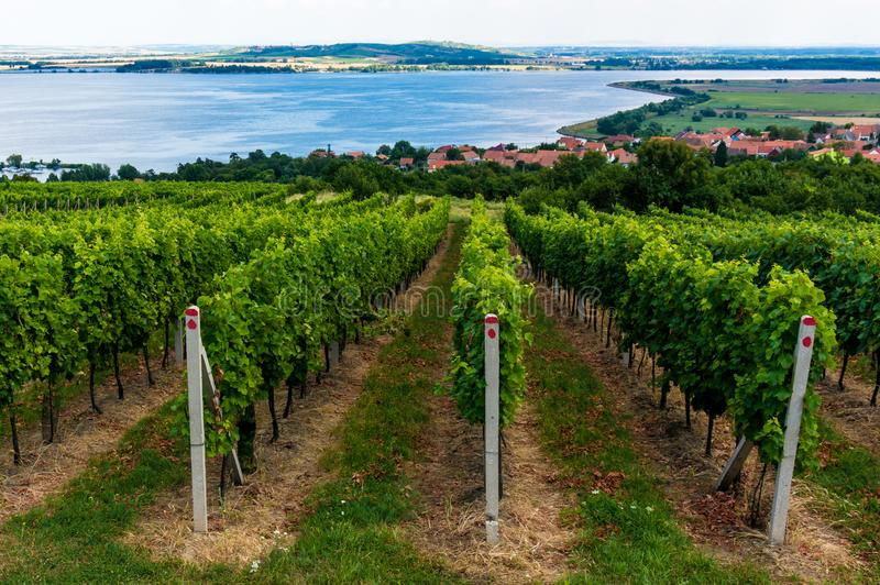 South Moravian vineyards in Czech Republic royalty free stock photography