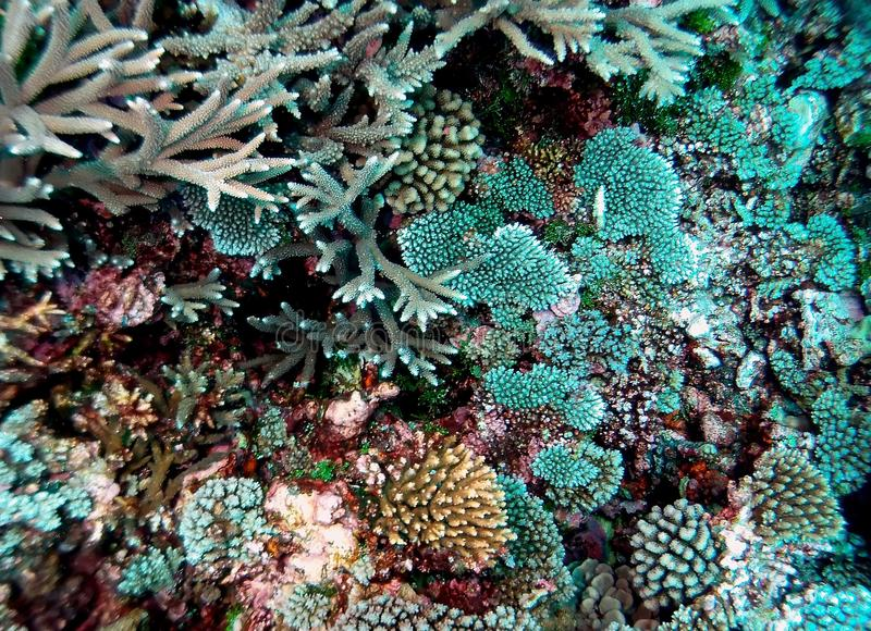 South Pacific Coral Colony Detail arkivfoto
