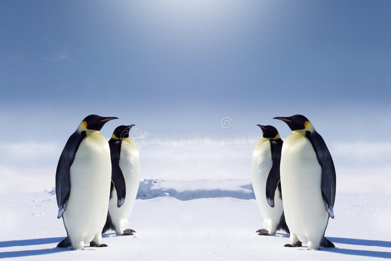 At the South pole royalty free stock image