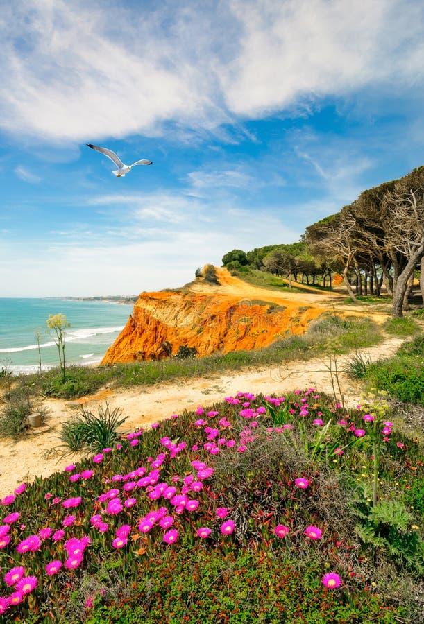 South Portugal coastline in spring. Coastline at Ohos de Aqua near Albufeira, Algarve, Portugal in spring with Hottentot Fig (Carpobrotus edulis) flowers in royalty free stock photography