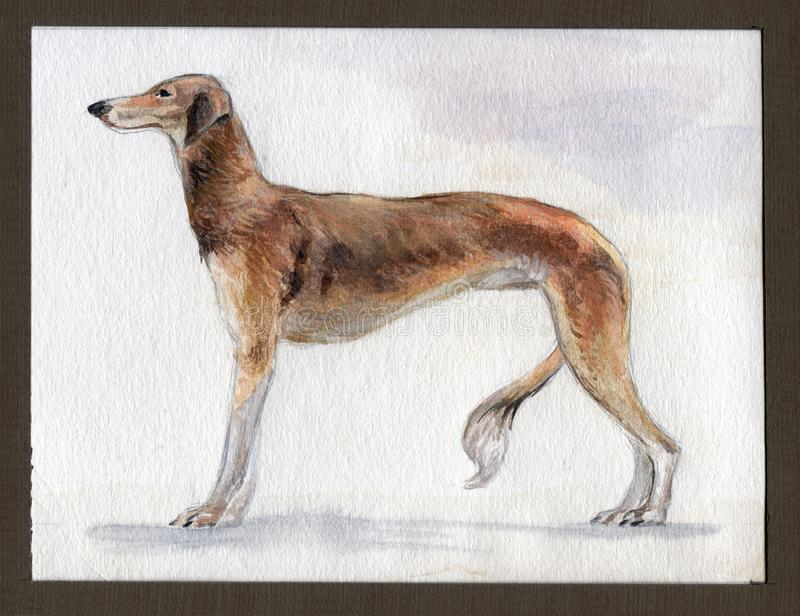 South Russian greyhound painted in watercolor in profile royalty free stock photography