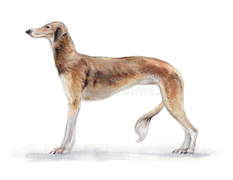 South Russian greyhound painted in watercolor in profile royalty free stock photo