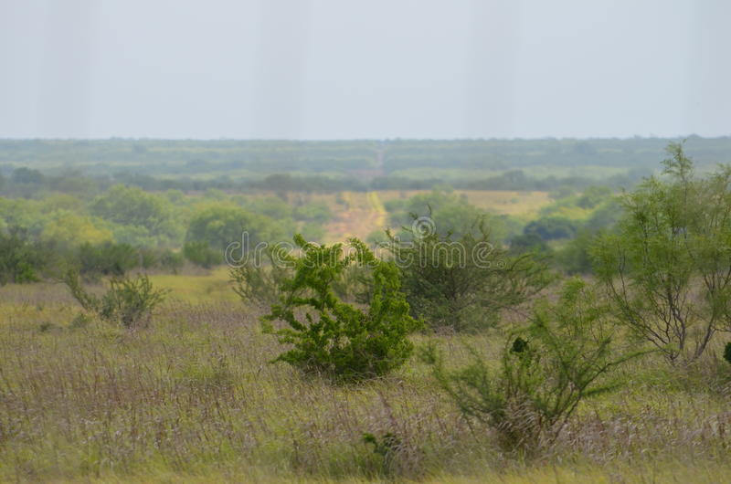 South Texas Landscape. Landscape of a Ranch in South Texas royalty free stock images