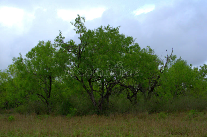 South Texas Landscape. Tree-filled landscape in South Texas royalty free stock photography