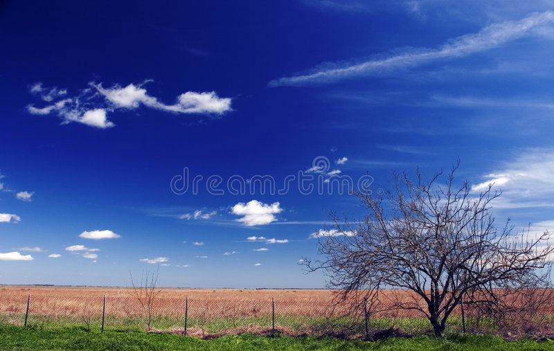 Download South Texas Prairie stock image. Image of southeast, fence - 206099