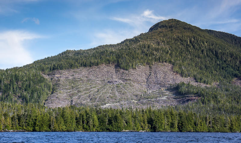 Southeast Alaskan Clearcut. Clearcut in Southeast Alaska north of Ketchikan as seen from a boat on the inside passage royalty free stock photo