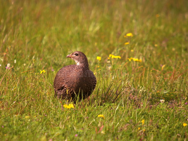 Download Southern African Birds Stock Photo Image Of National