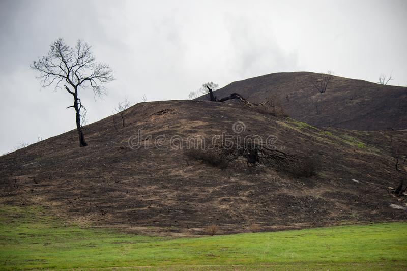 Southern California hill charred by wildfire. A hill and tree in Cheeseboro Canyon charred by the Woolsey Fire in November 2018. The area is in the Santa Monica royalty free stock photo