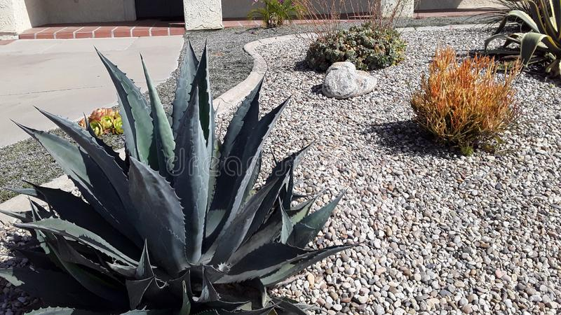 Southern California Rock Garden with Gravel and Cactus royalty free stock images