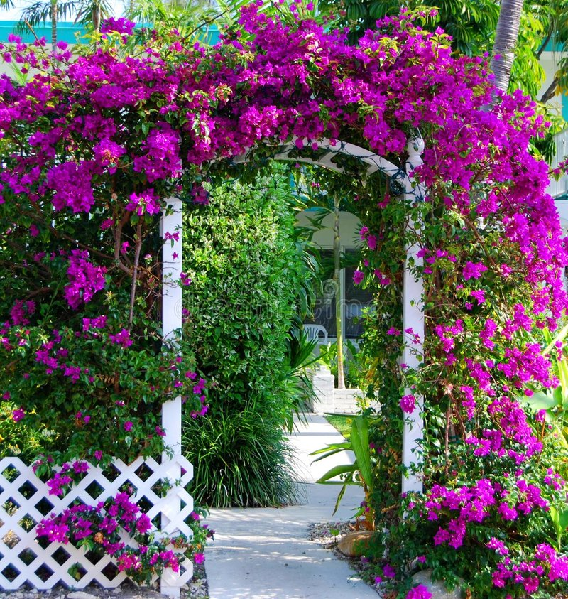 Southern Garden Gate With Bouganvillea. The ehntrance to this garden is flacked by a trellis laden with deep fuscia bouganvillea royalty free stock images