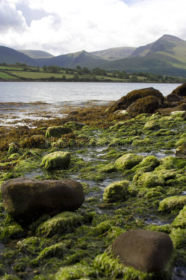 Download Southern Ireland stock image. Image of green, south, tranquil - 3643837