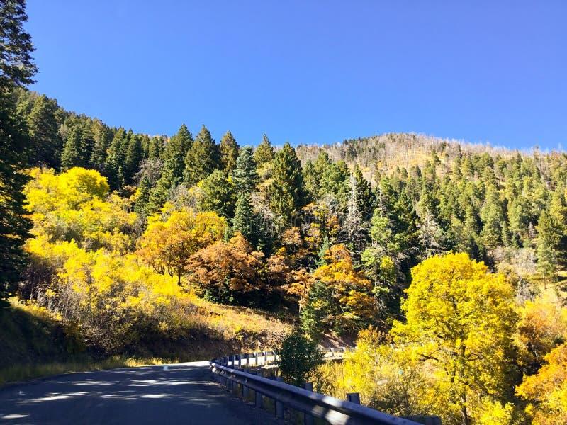 Southern NM Sacramento Mountain Foliage stock photography