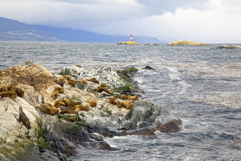 Southern Sea lions. & Cormorants resting on the Islands of Tierra Del Fuego with Les Eclaireurs Lighthouse in the background, Ushuaia, Argentina stock photography