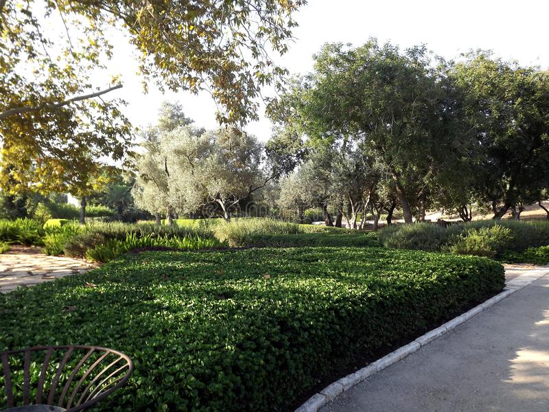 On the southern slope of the famous biblical mountain Carmel is Rothschild Park. This is a magnificent botanical park royalty free stock image