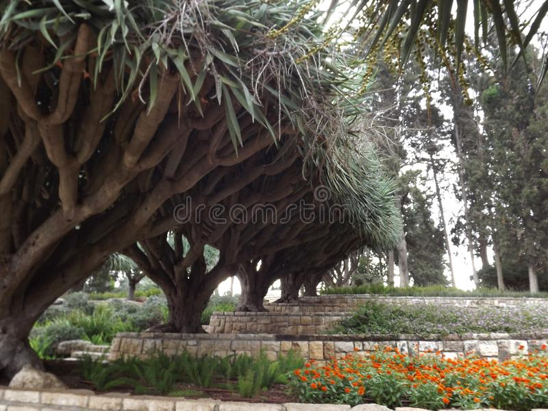 On the southern slope of the famous biblical mountain Carmel is Rothschild Park. This is a magnificent botanical park stock photo