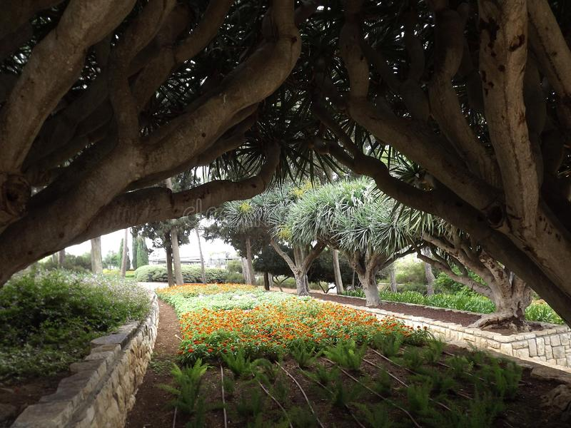 On the southern slope of the famous biblical mountain Carmel is Rothschild Park. This is a magnificent botanical park royalty free stock photos