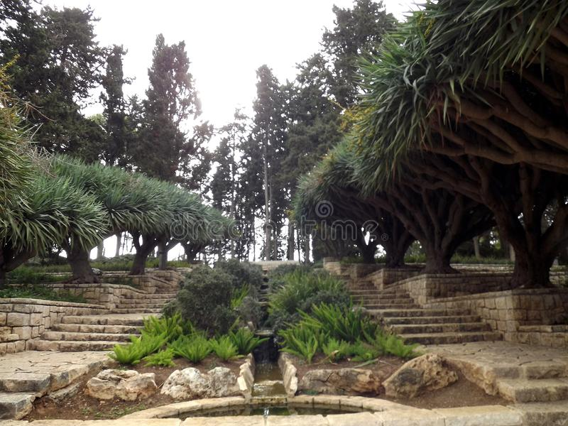 On the southern slope of the famous biblical mountain Carmel is Rothschild Park. This is a magnificent botanical park stock photos