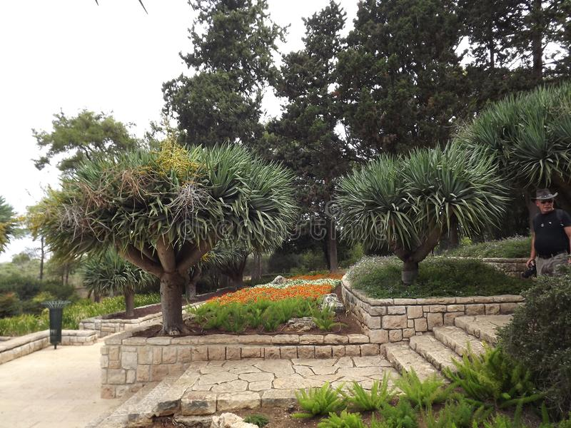 On the southern slope of the famous biblical mountain Carmel is Rothschild Park. This is a magnificent botanical park stock image