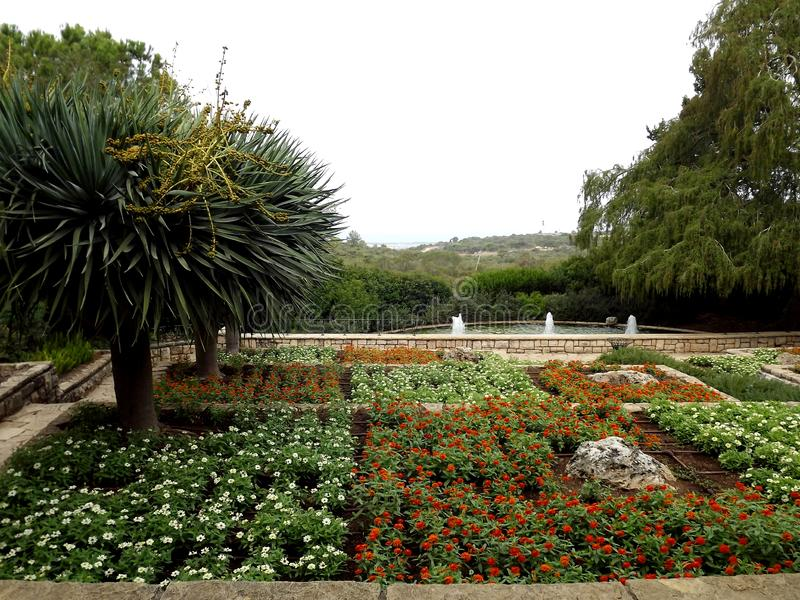 On the southern slope of the famous biblical mountain Carmel is Rothschild Park. This is a magnificent botanical park royalty free stock images