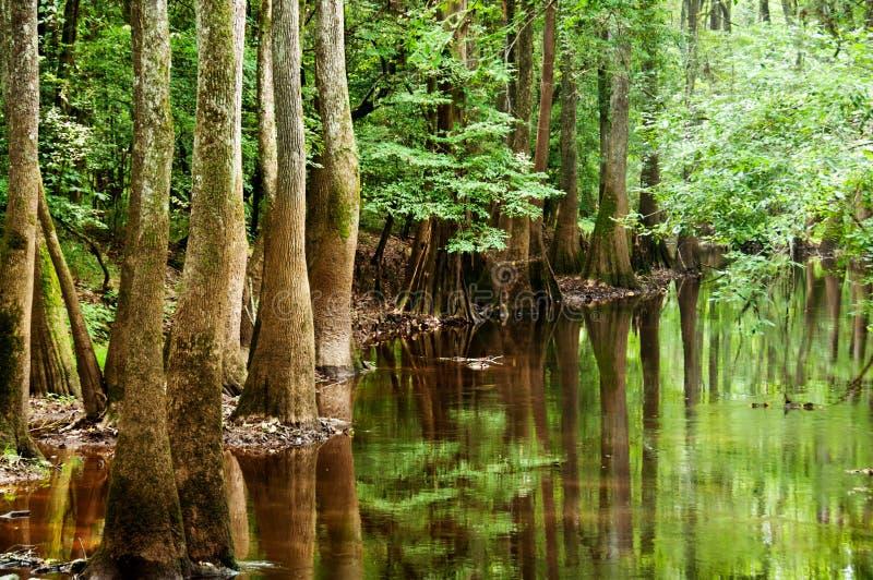 Southern Swampland. Small creek along south carolina national park royalty free stock image