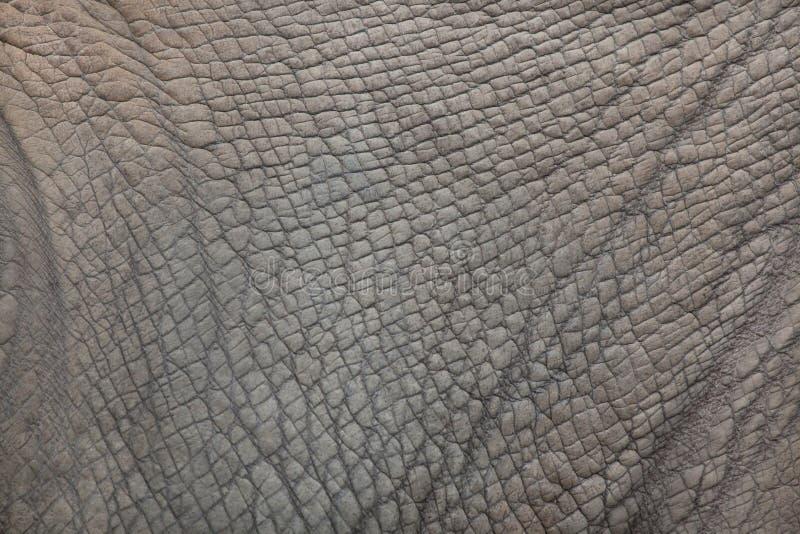 Southern white rhinoceros Ceratotherium simum simum. Skin texture royalty free stock photos