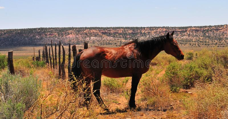 Southwest Landscape with Horses. Grazing along the roadside. Chestnut colored horse with black mane and tail. Native American. Southwestern scenery. Barbed wire stock photography