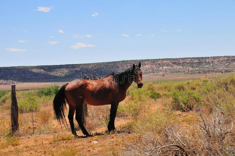 Southwest Landscape with Horses. Grazing along the roadside. Chestnut colored horse with black mane and tail. Native American. Southwestern scenery. Barbed wire stock photos