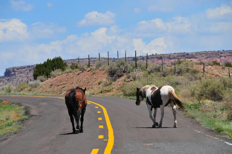 Southwest Landscape with Horses. Grazing along the roadside. Chestnut colored horse with black mane and tail and pinto pony companion. Native American royalty free stock photos